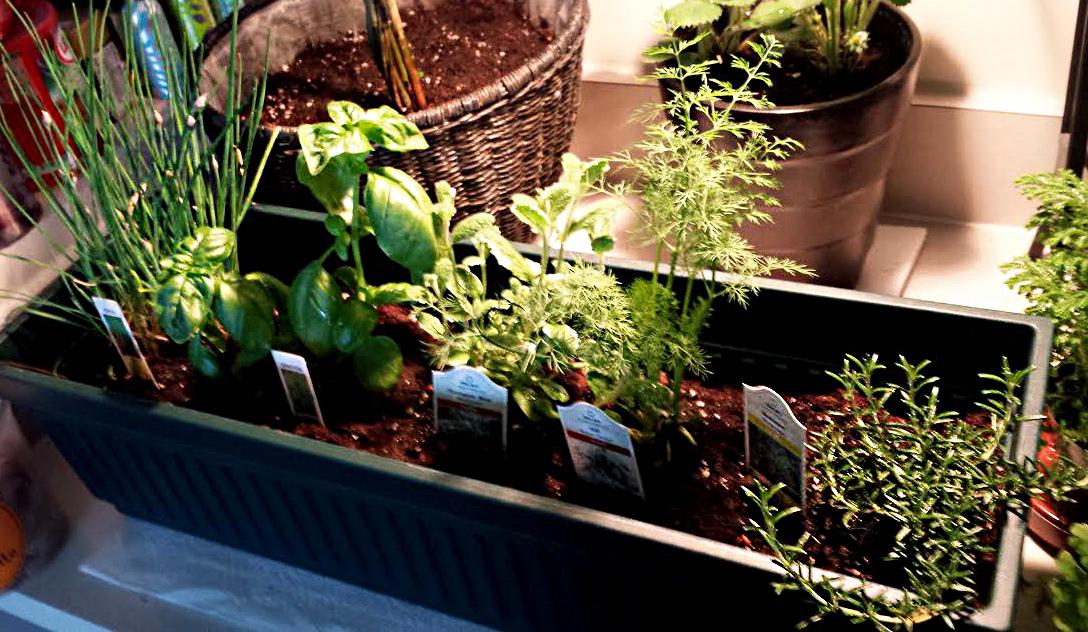 My Mini Indoor Herb Garden Bliss No 9